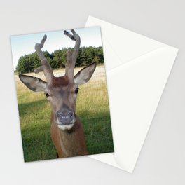 Fawn (Cervidae) Stationery Cards