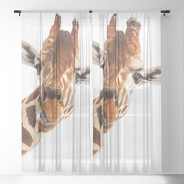 Silly Giraffe // Wild Animal Portrait Cute Zoo Safari Madagascar Wildlife Nursery Ideas Decor Sheer Curtain