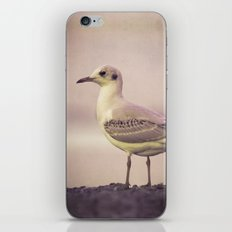 SONGS OF A BIRD I iPhone & iPod Skin