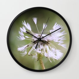 Seeds of the Dandelion Wall Clock