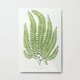Adiantum Pubescens from Ferns  British and Exotic (1856-1860) by Edward Joseph Lowe. Metal Print