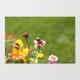 Busy Summer Bee Canvas Print
