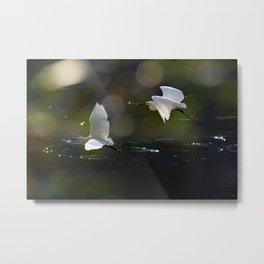 White Herons Flying Metal Print