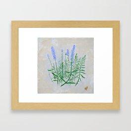 Lavender Plant Grows in the Garden Framed Art Print