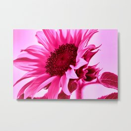 Hot Pink Sunflower Metal Print