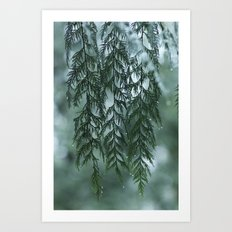 Nature's Drapery Art Print