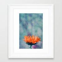 sunflower Framed Art Prints featuring sunflower by Claudia Drossert