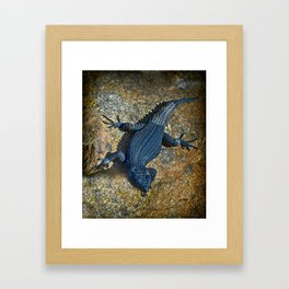 Black Girdled Lizard - Cape Point Reptilian Daze  Framed Art Print