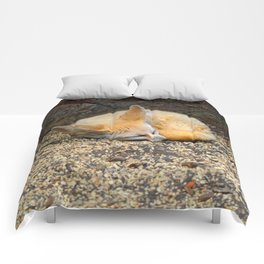 Time to Sleep Little Fennec Fox Comforters