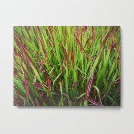 Grass in red Metal Print