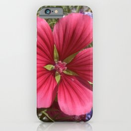 Rosy Mallow iPhone Case