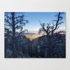 Ancient Bristlecone Pine Forest #1 Canvas Print