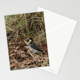 Acorn Woodpecker Stationery Cards