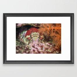 Grumpy fish Framed Art Print