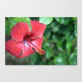 Hibiscus I Canvas Print