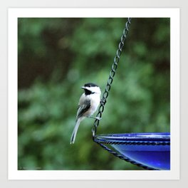 Summer Chickadee Art Print