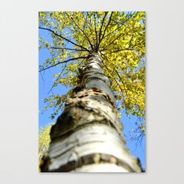 Running up the tree  Canvas Print