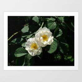 Flower Pic 3 Art Print
