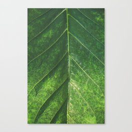 Botanical Gardens Leaf #101 Canvas Print