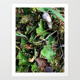 Spotted Lichen Art Print