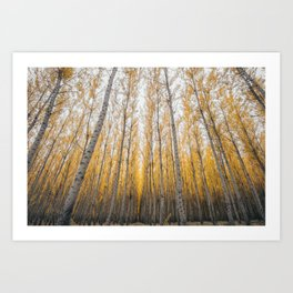 Boardman Trees Art Print