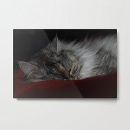 Sleeper Metal Print