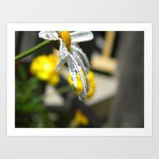Dripping Daisy  Art Print