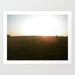 Brahman Bull Contemplating the Sunset Art Print