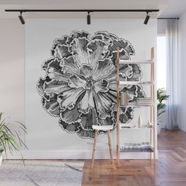 Echeveria engraving Wall Mural