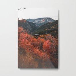 meadow glow Metal Print