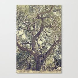 Mother Tree Canvas Print