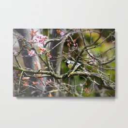 The little bird in the blossom tree Metal Print