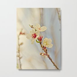 Almond Blossoms in the Wind Metal Print