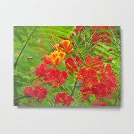 Miniature poinciana flowers Metal Print