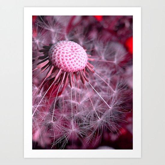 dandelion macro II Art Print