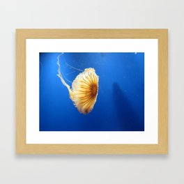 Jellyfish 2 Framed Art Print