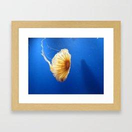 Jellyfish 2 Framed Art Print