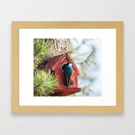 Blue Swallow Photography Print Framed Art Print