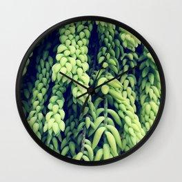 Green of Sedum Morganianum Wall Clock