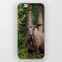 No Bull iPhone Skin