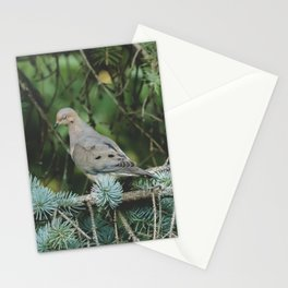 Mourning Dove in Blue Spruce Stationery Cards