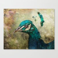 peacock Canvas Prints featuring Peacock by Pauline Fowler ( Polly470 )