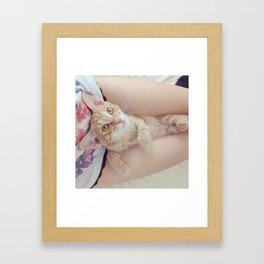 Kitten Cuddle Framed Art Print