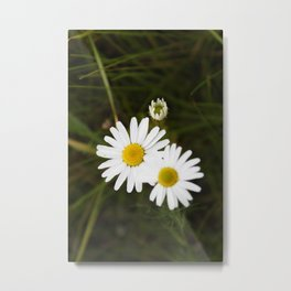 The Daisy In The Middle Metal Print