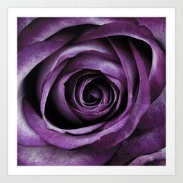 Purple Rose Decorative Flower Art Print