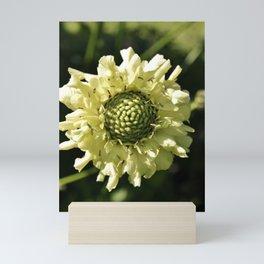 PALE CREAM BEAUTY SCABIOUS FLOWER Mini Art Print