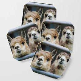 Alpaca Friends Coaster