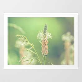 Ribwort Plantain Weeds // Flowers Art Print