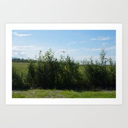 Airplane and Fence Art Print