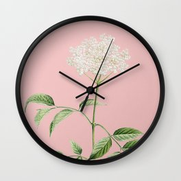 Vintage Blooming Elderflower Tree Botanical Illustration on Pink Wall Clock